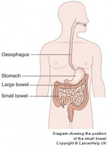 The-bowel