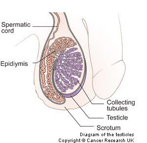 Testicles20MAY13