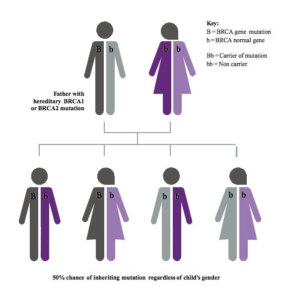 Understanding Genes Mutations Marie Keating Foundation